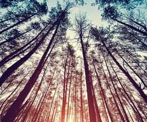 dreams, forest, and wood image