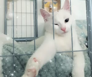 animal, cat, and chat image