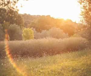 nature and sunshine image