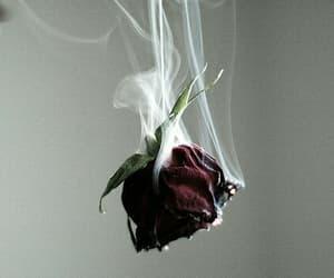 rose, flowers, and smoke image