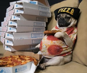 dog, pizza, and cute image