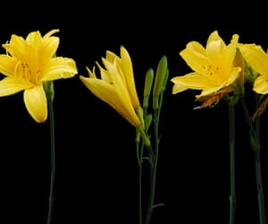 flowers, png, and yellow image