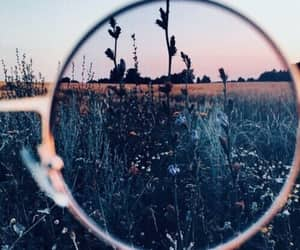 flowers, nature, and glasses image