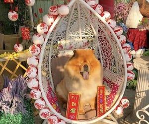 dog, china, and aesthetic image