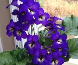 Çok güzel çiçek image