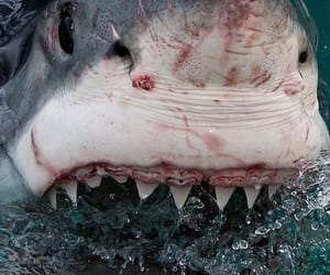 shark, blood, and ocean image