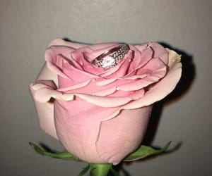 amour, bague, and Fleurs image