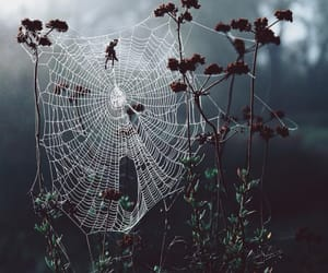 spider and nature image