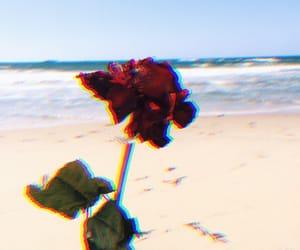 beach, rose, and grunge image
