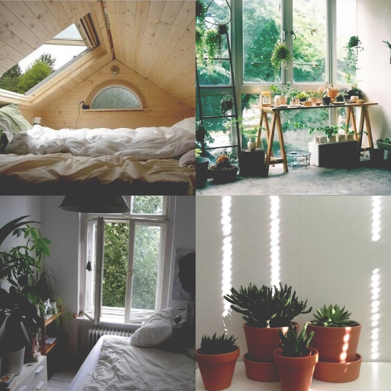 aesthetic, cactus, and life image