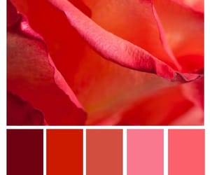 color, colour, and red image