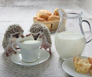 milk, cute, and hedgehog image