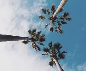 sky, summer, and palm trees image