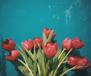 flores, tulips, and flowers image
