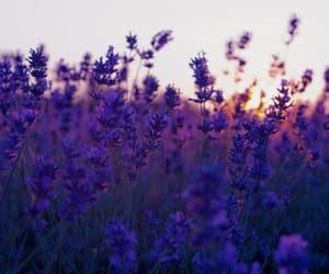 flowers, purple, and love image