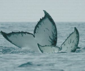whale, theme, and nature image