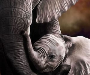 elephant, mother, and love image