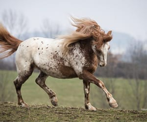 animals, horses, and nature image