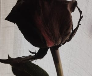 black, flowers, and cool image