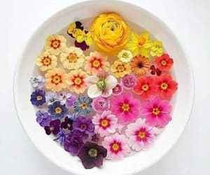 colorful and flowers image
