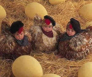 baby and Chicken image