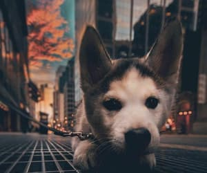 dog, city, and cute image