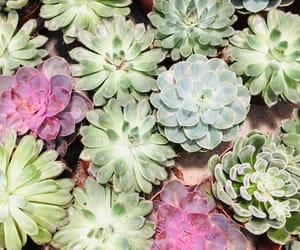 wallpaper, cactus, and phone wallpaper image