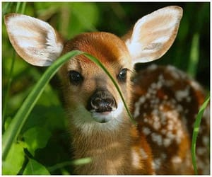 deer, baby, and fawn image
