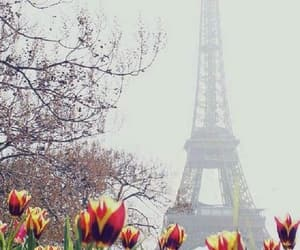 paris, flowers, and tulips image