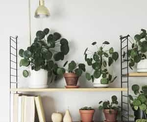 home, plants, and flowers image