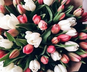 flowers and tulipes image