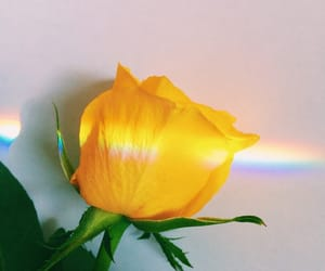 yellow, flower, and rainbow image