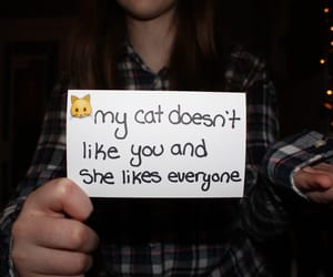 cat, kitty, and quote image