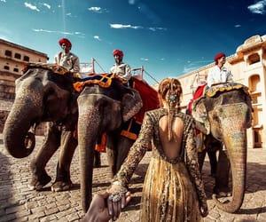 india, couple, and elephant image