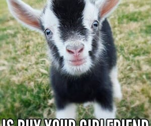 funny, goat, and march image