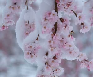blossoms, winter, and february image