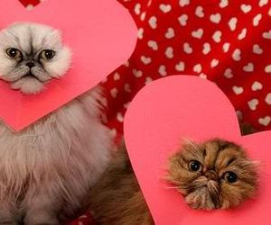 cat, valentine, and hearts image