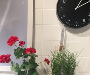 clock, plant, and simple image