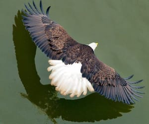 eagle and photography image
