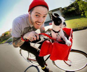 dog, tattoo, and bike image