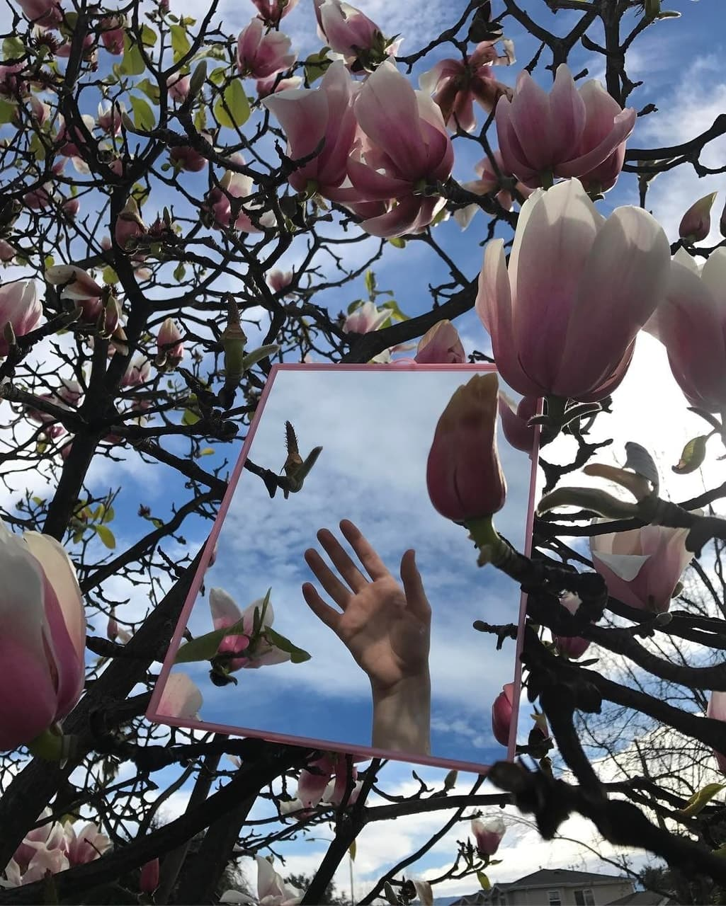flowers, hand, and magnolia image