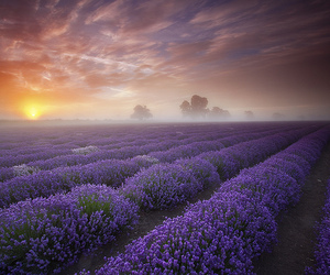 colourful, dawn, and dorset image