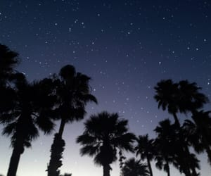 palms, purple, and stars image