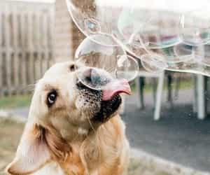 bubble, dog, and photography image