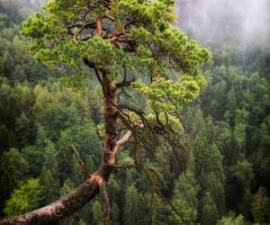 arbol, naturaleza, and paisaje image