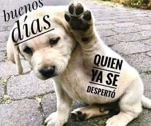 dog, buenos días, and perros image