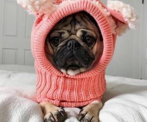 crochet, pug, and dog image