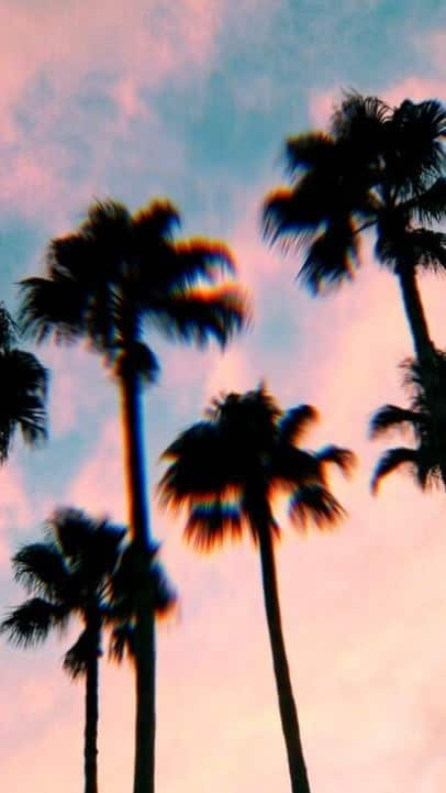 summer, palms, and wallpaper image