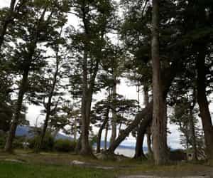 arboles, camping, and patagonia image