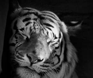 animal, gorgeous, and light image